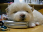 puppy_dogs_1