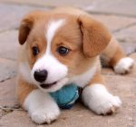 puppy_dogs_17