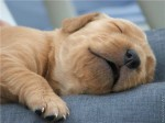 puppy_dogs_19