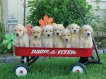 puppy_dogs_22