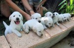 puppy_dogs_24