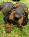 puppy_dogs_25