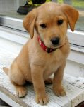 puppy_dogs_36