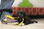 puppy_dogs_4