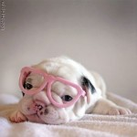 puppy_dogs_5