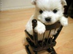 puppy_dogs_7