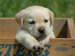 puppy_dogs_9